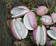 厂家直供八月瓜土香蕉肉籽分离机