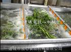 FX-800净菜设备