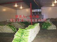 上海芹菜蔬菜保鲜冷库