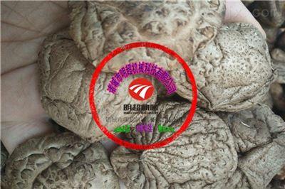 红菇蘑菇烘干房温度如何控制 电加热恒温香菇干燥机