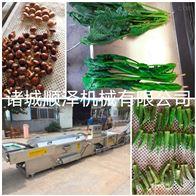 SZ4000多功能全自动橄榄菜专用漂烫预煮机
