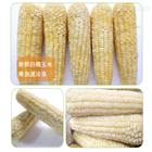玉米清洗设备