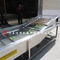 廣東連續式杏鮑菇清洗風干生產線