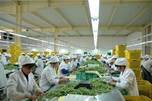 集群化提升农业产业化 甘肃民乐农产品加工迎春