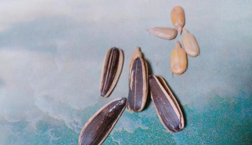 瓜子产业迸发新生命力 工艺革新成当务之急