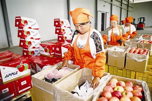 我国出口食品农产品质量安全示范区总数增至291个