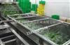 LJQX-2500酸菜喷淋清洗机哪家专业 酱菜泡菜脱盐清洗机哪家质量好 叶菜类清洗设备低价